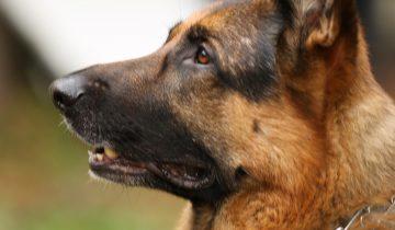 Испугавшись грохота петард, собака застряла в узком проеме