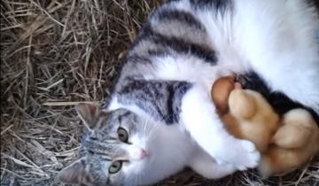Кошка и ее маленькие утята
