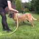 Собака не может дождаться своей очереди и не дает принять душ приятелю!