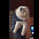 Эта собака думает, что она маленький щенок!