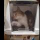 Кошка залезла в новое мусорное ведро и оказалась в ловушке