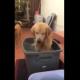 Собака купается с таким удовольствием, что невозможно не улыбнуться!