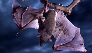 10 фактов о животных, которые оказали неправдой!