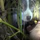 Спасатели были в шоке, увидев, что находится в убежище этой собаки!