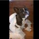 Собака-ябеда своим поступком взорвала интернет!