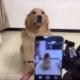 Из этой собаки получилась бы отличная модель!