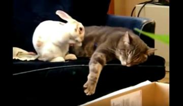 Этот домашний кролик думает, что он кот!