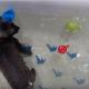 Приготовили ванну для ребенка, а в итоге — купается кот!