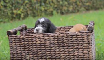 Маму этих щенят недавно принесли из приюта, и вот она уже привела чудесное потомство!