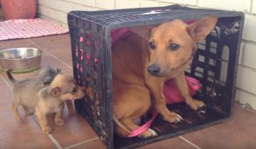 Без своих щенков собака не знала, что делать