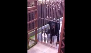 Парни сказали собакам «Привет!», но не ожидали услышать такое в ответ!