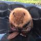 Маленький детеныш бобра умывается в бассейне