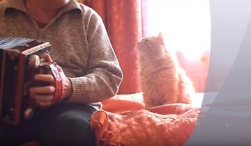 Кот обожает, когда хозяин играет на гармони!