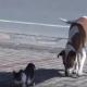 Когда вы узнаете, почему питбуль лает на кошку, вы будете поражены!