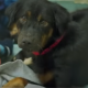 Они отправились в приемник спасти 6 щенков, а ушли, забрав 15 собак за 15 минут!