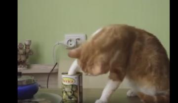 Кот залез на стол и ест оливки!