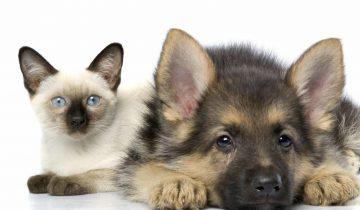 Дружба кошек и собак. Веселая подборка