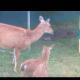 На заднем дворе собрался целый зоопарк