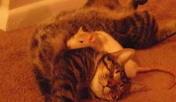 Вы только посмотрите, какие друзья у этого кота!