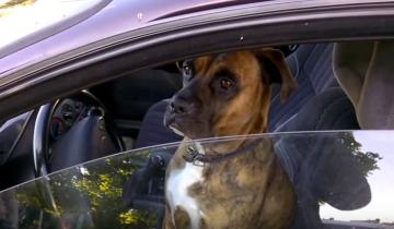 Собака сидит за рулем. Гаишники решили пошутить!