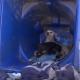 Она жила в мусорном контейнере со своим щенком