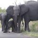Слоненок не понимает, что это за штуковина!