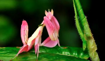 20 красивейших животных неожиданной расцветки