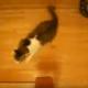 Как на скорости вписаться в поворот? Лайфхак от кошек