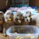 Луговые собачки так проголодались, что съели миску кукурузы за пару минут