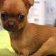 Как выглядит щенок, который родился без передних лапок