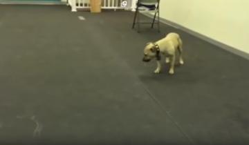 У собаки забавная реакция на пиццу