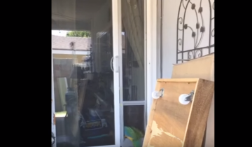 Попугай нашел способ убежать из дома!