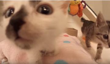 Специальные ясли для котят!