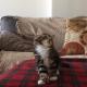 Что вытворяет этот котенок?