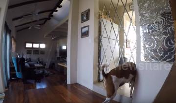 Хозяин установил решетку на вход в кухню. Всему виной его пес-воришка!