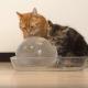 Кошки играют с ледяным шаром