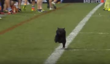 Во время матча на поле выбежал очаровательный черный кот!
