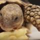 Черепаха в первый раз пробует оладьи!
