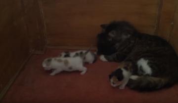 Мама-кошка ведет своих котят в чужой дом