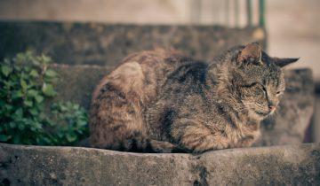 Кот подтолкнул своего друга, когда тот осторожно спускался с лестницы
