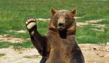 Медвежонок забрался в машину и заблокировал дверь