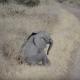 Слоненок не в духе