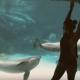 Девушка рассмешила дельфина акробатическим трюком
