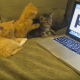 Котята осваивают компьютер!