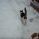 Эти два кота просто играли в снегу, как вдруг…
