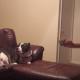 Каждый раз, когда хозяйка достает камеру, пес отворачивается!