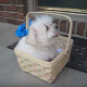Папа подарил дочери чудесного щенка