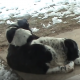 Как греются животные?
