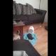 Проснувшись утром, кошка обнаружила щенка