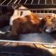 Он засунул козленка в духовку, чтобы оживить его!